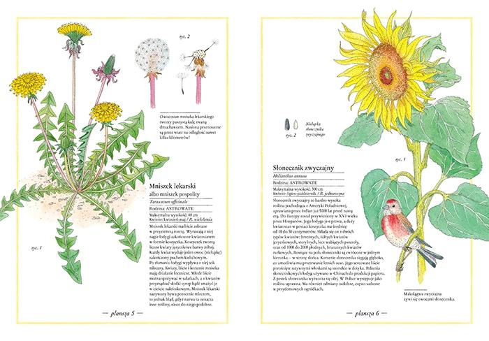 https://www.zakamarki.pl/media/catalog/product/i/n/inwentarz-kwiatow_12-13_www.jpg