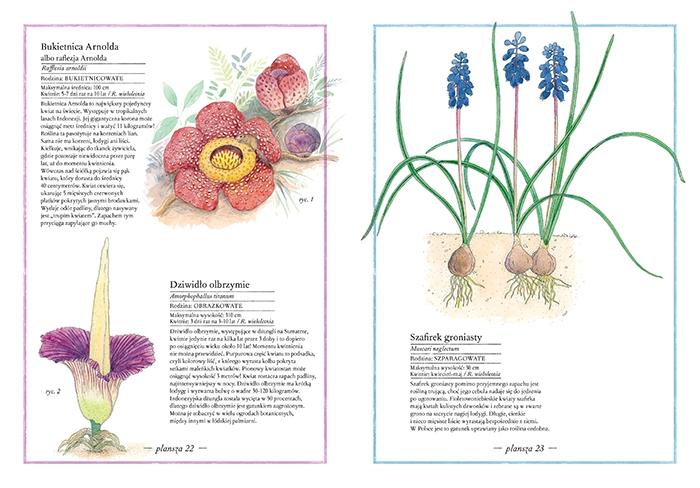https://www.zakamarki.pl/media/catalog/product/i/n/inwentarz-kwiatow_30-31_www.jpg