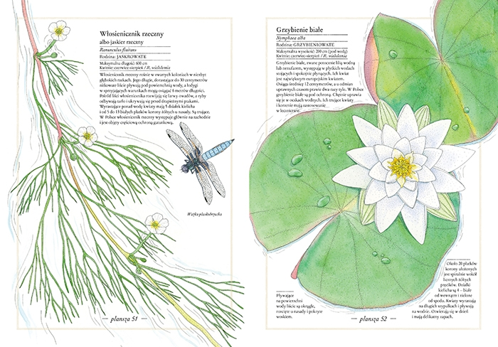 https://www.zakamarki.pl/media/catalog/product/i/n/inwentarz-kwiatow_60-61_www.jpg