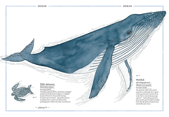 Ilustrowany inwentarz zwierząt-877